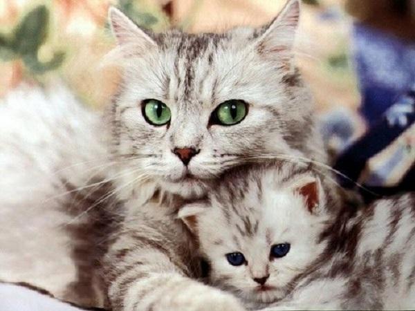 Mộng mơ thấy mèo nên đánh ngay con số đề nào dễ trúng
