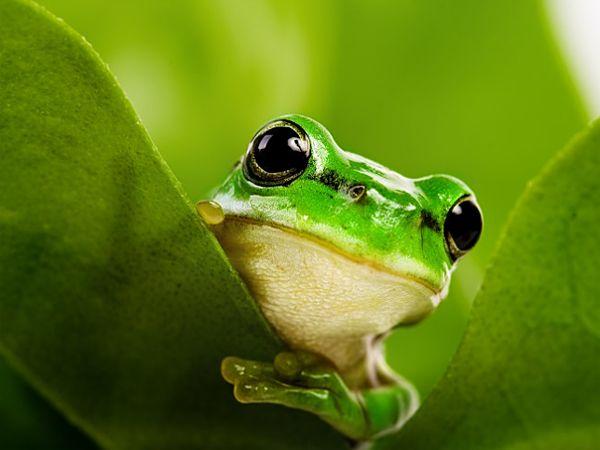 Mơ thấy ếch đánh con gì phát tài, là điềm hung hay cát?