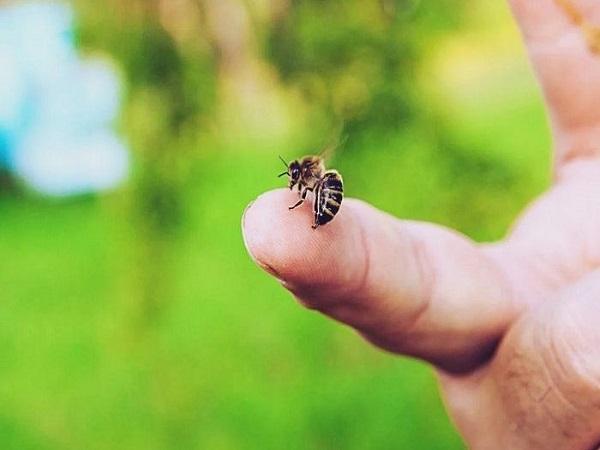 Bị ong đốt là điềm gì